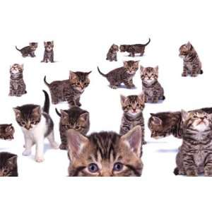 KITTENS KITTY CATS COLLAGE CUTE PETS 24x36 POSTER
