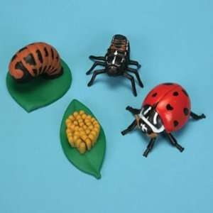 Ladybug Life Cycle Stages Set:  Industrial & Scientific
