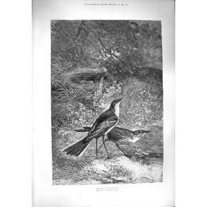 NATURE ANTIQUE PRINT BIRDS NEST EGGS FLOWERS TREES