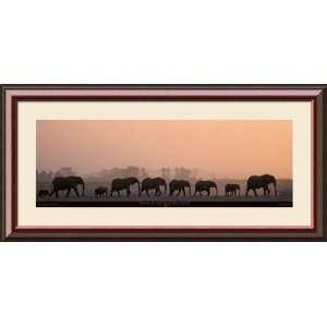 Loxodonta Africana (African Bush Elephant) Framed Art