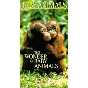Baby Animals: Wonder of Baby Animals [VHS]: Wonder of Baby