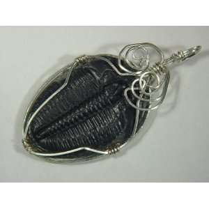 Sterling Silver Wire Wrapped Trilobite Fossil Pendant Necklace Jewelry
