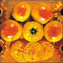 Gold Medal Tomato   20 Seeds   Extra Sweet Fruits
