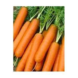 Little Finger Carrot Seed Pack Patio, Lawn & Garden