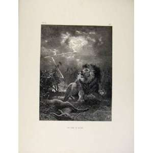 Old Print Lion King Of Beasts Buck Wild Animals