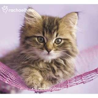 Rachael Hale Cats 2012 Wall Calendar