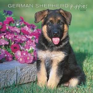 German Shepherd Puppies 2008 Calendar Office Products