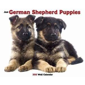Just German Shepherd Puppies 2011 Wall Calendar Office