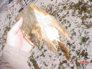Fox Squirrel pelt beautifully tanned skin hide leather, also called