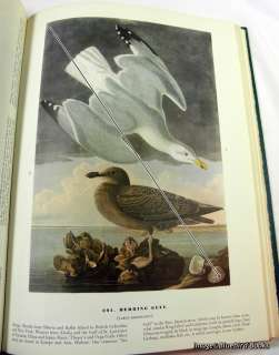 Birds of America John James Audubon 1962 edition w/DJ