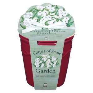 Carpet of Snow Sweet Alyssum Cache Pot with Flower Seeds, Organic