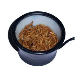 Worm Warmer for Bird Feeders   Sealed Heating Element: Everything Else